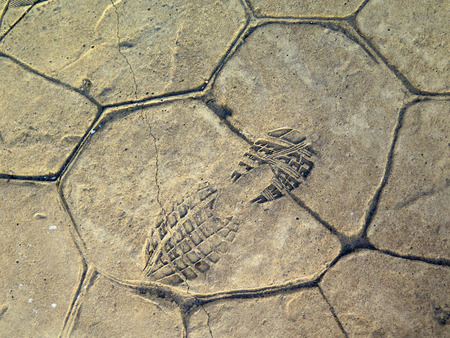 shoeprint: Footprint on newly laid concrete pavement