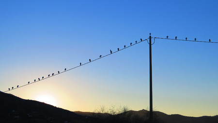 egrets: Row of lesser egrets on power cable at dawn in Alora Countryside, Andalucia Stock Photo
