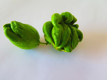 close-up of Odd shaped green lemon fruits