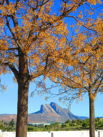 horison: Buttonball Tree and Lovers Rock in Sunshine near Antequera, Andalucia