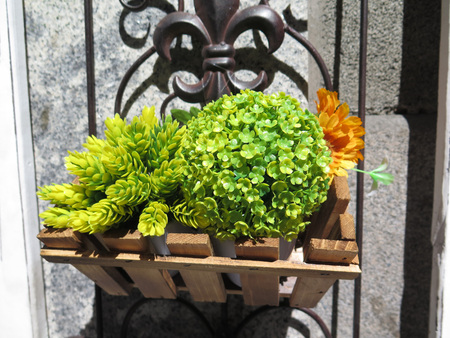 window bars: Succulent green plants in small planter on wall hanging from window bars in central Madrid, Spain
