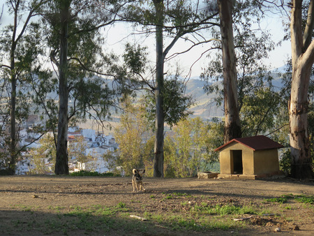 penned: Dog on chain in front of brick built kennel in eucalyptus shaded ground in Andalusian village Stock Photo