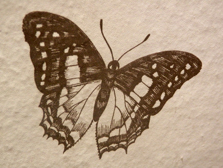 buff: Drawing of a butterfly on buff paper
