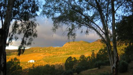 eucalyptus trees: Sun shining over Alora countryside, Andalusia viewed through eucalyptus trees