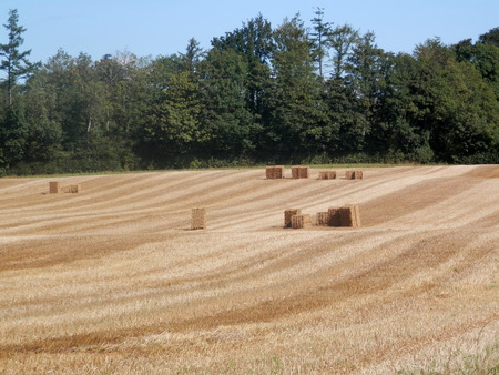 stubbly: Square straw bales in stubbly field in Southern Denmark Stock Photo
