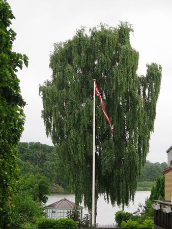 lakeside: Danish flag on pole in lakeside garden