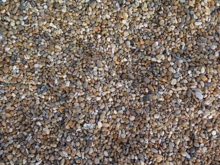 tejas: Primer plano de herpes zóster en la playa en Dorset Foto de archivo