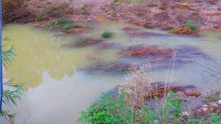 canne: Primo piano di Canne in lento fiume che scorre
