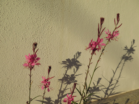 Spindly red flowers casting shadow on concrete wall Stock fotó