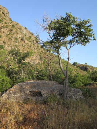 Spindly tree and low rock on sunny Andalusian hillside