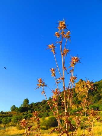 Dry thistle plant against rocky rural background