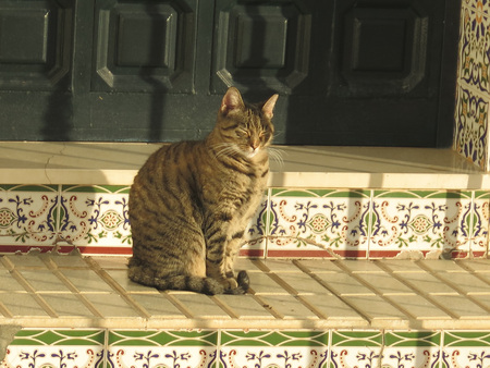 Spanish tabby cat enjoying morning sun on tiled steps in Andalusian village
