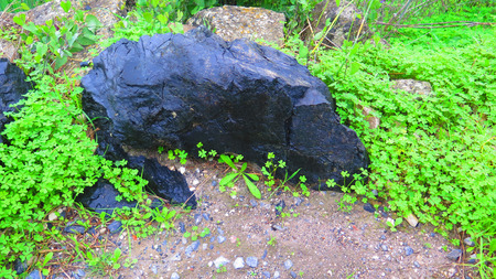 Large black shiny rock in shamrock like weeds on roadside verge in Andalusian countryside Stockfoto