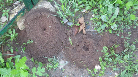 Small round ant excavation mounds with centre holes in the countryside in andalusia, Spain