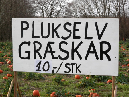 Field full of Pick Your Own pumpkins for sale to general public in Danish January sunshine Stock Photo