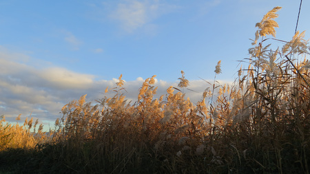 Roadside bordered by seeding tall green bamboo grass against Andalusian winter sky Stockfoto