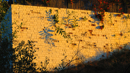 Spindly plants casting shadows on white brick wall in Andalusian morning sun