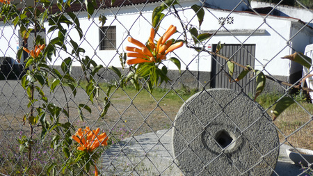Cluster of orange honeysuckle on fence above olive mill stone in Andalusian village