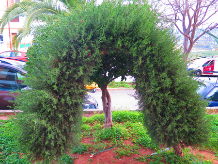 Decorative miniature topiary in village street of Andalusian village