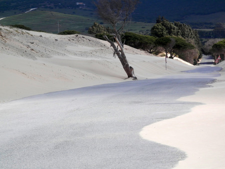 Sand dunes on windy day at Punto Paloma near Tarifa, Andalusia Banque d'images - 121265976