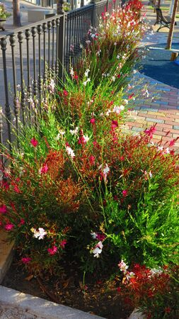 Spindly red and white flowers against cast iron railing in Andalusian village Stock fotó
