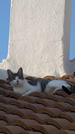 Spanish grey and white cat enjoying morning sun on tiled roof in Andalusian village