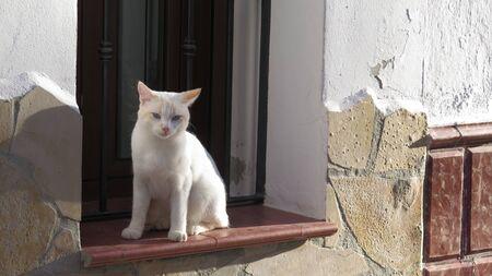 Young kitten sitting on window sill wall in Andalusian village street 版權商用圖片