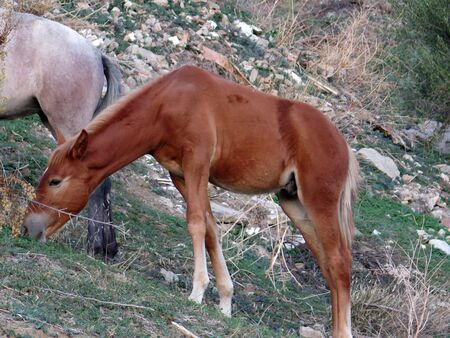Young foal in field without bridle in Alora countryside Andalusia 版權商用圖片