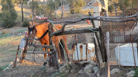 Emaciated horse in rustically fenced meadow outside Andalusian village in early January sunshine Stockfoto