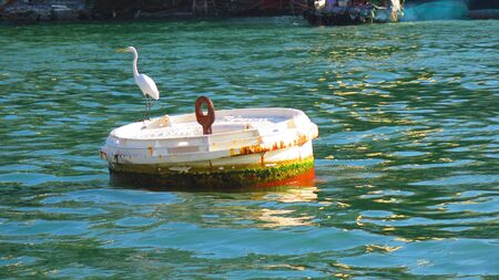 Great egret on buoy in Aberdeen harbor, Hong Kong island Stock Photo