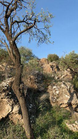 Almond tree and rocks in idyllic setting in rural Andalusia Archivio Fotografico