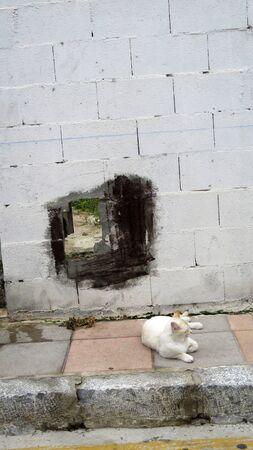 Young kitten resting on pavement below hole in wall in Andalusian village street