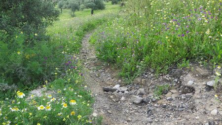 Country trail through wild flower covered meadow in rural Andalusia