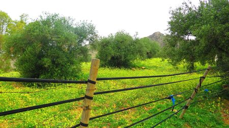 Yellow spring flowers in green Andalusian meadow in spring sunshine behind posts with rubber tubing as wire deterrent