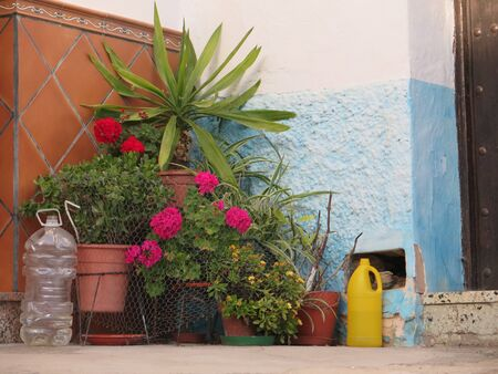 Small Flower display on pavement with with water bottles to deter dogs outside residential house in Andalusian village