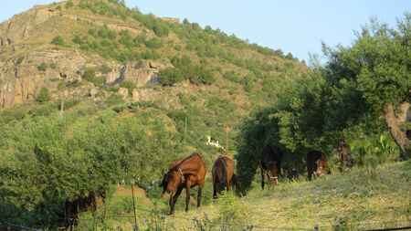 Horses roaming countryside embankment in rural Andalusian morning sunshine Archivio Fotografico