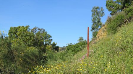 Variety of spring flowers in green Andalusian meadow in spring sunshine with rusty metal pole Archivio Fotografico