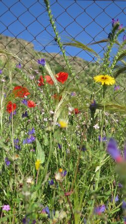 Large Variety of wild flowers behing chainlink fence in Andalusian countryside