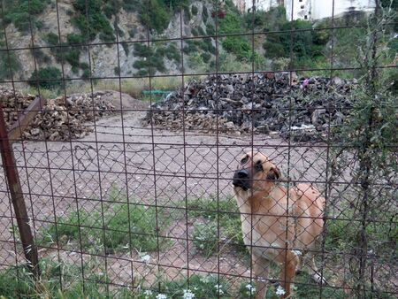Docile guard dog behind fence protecting piles of fire wood in Andalusian village