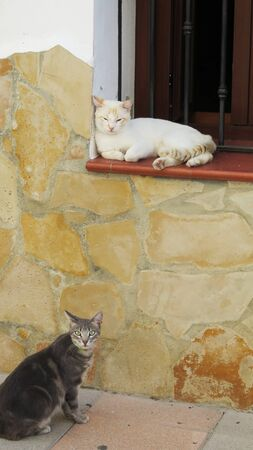 Young kittens sitting on window sill wall and pavement in Andalusian village street