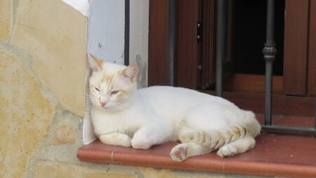 Young kitten relaxing on window sill in Andalusian village street