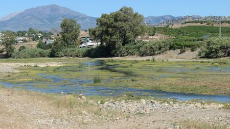 Scenic view of algie green shallow Rio Grande in Andalusia, Spain