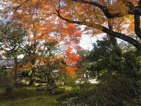 Variety of trees producing colorful autumn scenery in Kyoto temple garden park Archivio Fotografico