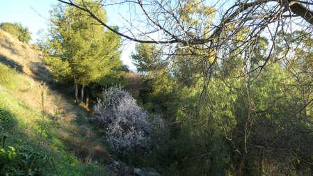 Deep ravine with flowering almod tree on shaded hillside Stockfoto