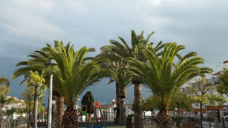 Cluster of trimmed palm trees against dark stormy sky