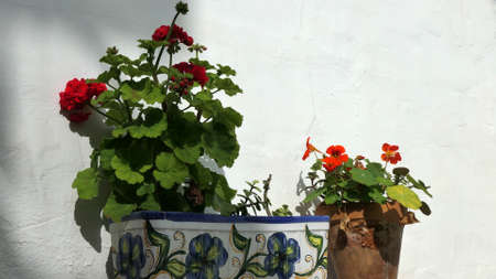 Single flowerpot on whitewashed Andalusian village wall with flowering geranium