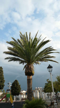 Trimmed palm trees against sunny cloudy sky in Andalusian village Stockfoto
