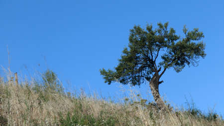 Tree in field of wild flowers against cloudless blue sky Andalusia