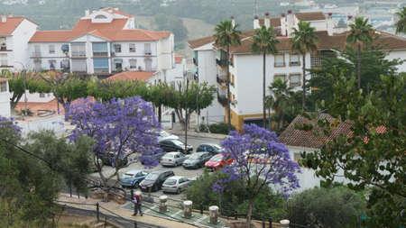 Flowering Jacaranda tree late May in Alora village, Andalusia, Spain