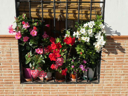 Delicate scented geranium and petunia plants on window sill with security bars in Andalusian village